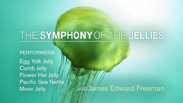 Symphony-of-the-Jellies_Preview_640x380